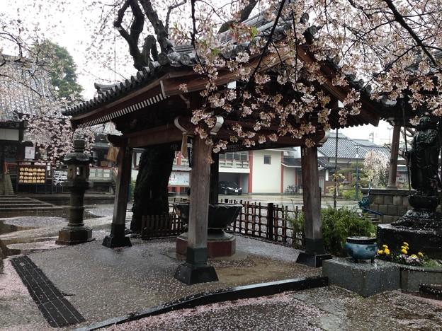 13.04.02.新井薬師(中野区新井)手水舎