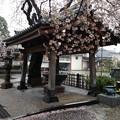 Photos: 13.04.02.新井薬師(中野区新井)手水舎