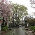 Photos: 13.04.02.北野神社(新井天神。中野区新井)