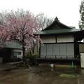 北野神社(新井天神。中野区新井)舞殿