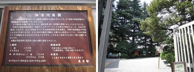 旧古河庭園(東京都北区)