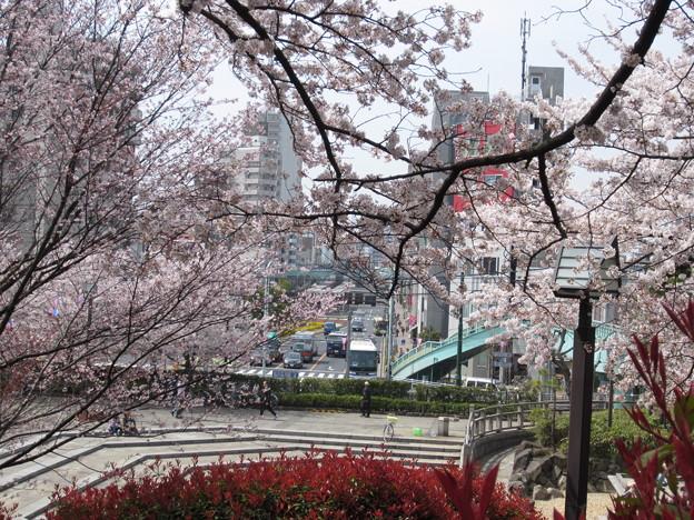 12.04.10.旧渋沢庭園/飛鳥山公園(東京都北区)
