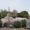 Photos: 12.04.10.旧渋沢庭園/飛鳥山公園(東京都北区)王子神社