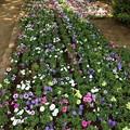 Photos: 13.06.09.旧渋沢庭園/飛鳥山公園(東京都北区)