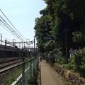 13.06.09.旧渋沢庭園/飛鳥山公園(東京都北区)飛鳥の小径