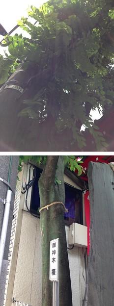Photos: 13.06.09.装束稲荷神社(東京都北区)