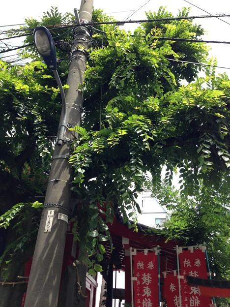 13.06.09.装束稲荷神社(東京都北区)
