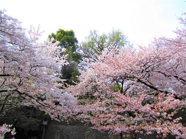 12.04.10.音無親水公園(東京都北区)