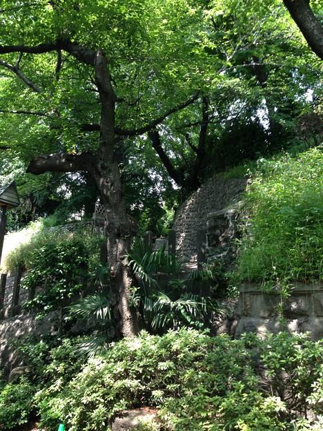13.06.09.音無親水公園(東京都北区)