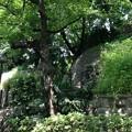 Photos: 13.06.09.音無親水公園(東京都北区)