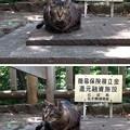 13.06.09.音無親水公園(東京都北区)(ΦωΦ)