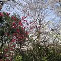 Photos: 12.04.10.八幡山 若宮八幡神社(北区中十条)