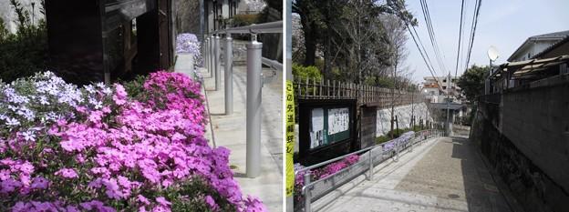 Photos: 12.04.10.稲付城/静勝寺(北区西赤羽)より東