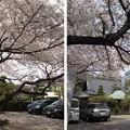 Photos: 12.04.10.稲付城/静勝寺(北区西赤羽)