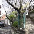 Photos: 12.04.10.稲付城/静勝寺(北区西赤羽)北東下