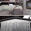 Photos: 東高野山 妙楽院 長命寺 (練馬区高野台)本堂