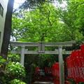 Photos: 武蔵野稲荷神社(練馬区栄町)東鳥居