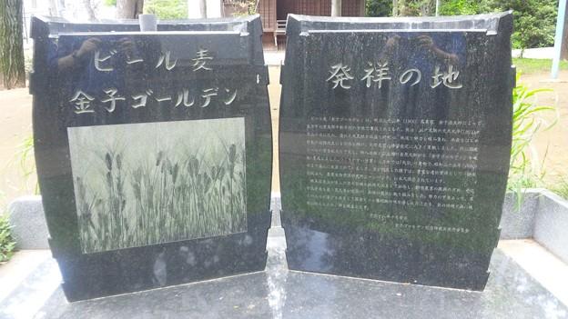 豊玉氷川神社(練馬区豊玉南)ビール麦発祥地