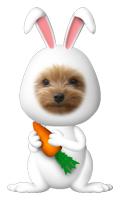 Photos: こうめウサギ