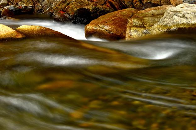 写真: 冬のカメラ川遊び~