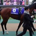 Photos: レッドアルヴィス(1回東京8日 11R 第32回 フェブラリーステークス(GI)出走馬)