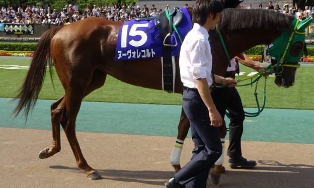 ヌーヴォレコルト(2回東京8日 11R 第10回 ヴィクトリアマイル(GI)出走馬)