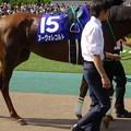 Photos: ヌーヴォレコルト(2回東京8日 11R 第10回 ヴィクトリアマイル(GI)出走馬)