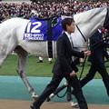 Photos: ゴールドシップ(5回東京9日 11R 第35回 ジャパンカップ(GI)出走馬)