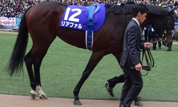 リアファル(5回中山8日 10R 第60回グランプリ 有馬記念(GI)出走馬)