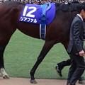 Photos: リアファル(5回中山8日 10R 第60回グランプリ 有馬記念(GI)出走馬)