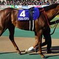 写真: アスカノロマン(1回東京8日 11R 第33回 フェブラリーステークス(GI)出走馬)
