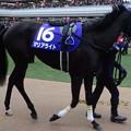 Photos: マリアライト(5回中山8日 10R 第60回グランプリ 有馬記念(GI)出走馬)