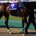 写真: モンドクラッセ(1回東京8日 11R 第33回 フェブラリーステークス(GI)出走馬)