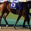 Photos: タガノトネール(1回東京8日 11R 第33回 フェブラリーステークス(GI)出走馬)