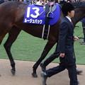 Photos: ルージュバック(5回中山8日 10R 第60回グランプリ 有馬記念(GI)出走馬)