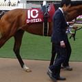 ロードクエスト(2回中山7日 11R 第65回 フジテレビ賞スプリングステークス(GII)出走馬)