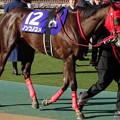 写真: ノンコノユメ(1回東京8日 11R 第35回 フェブラリーステークス(GI)出走馬)
