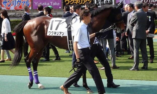 ワグネリアン(2回東京12日 10R 第85回 東京優駿(日本ダービー)(GI)出走馬)