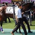 写真: ワグネリアン(2回東京12日 10R 第85回 東京優駿(日本ダービー)(GI)出走馬)
