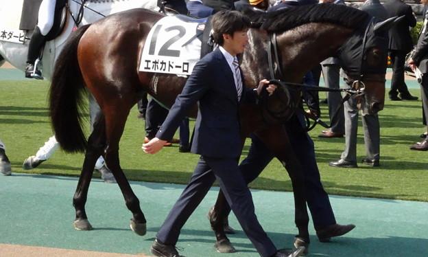 エポカドーロ(2回東京12日 10R 第85回 東京優駿(日本ダービー)(GI)出走馬)