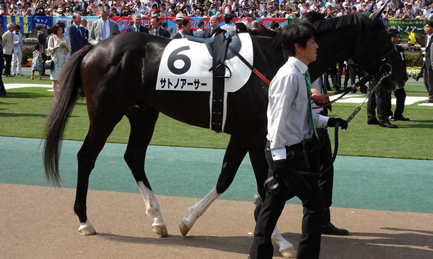 サトノアーサー(2回東京12日 10R 第84回 東京優駿(日本ダービー)(GI)出走馬) (1)