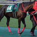 写真: ノンコノユメ(1回東京2日 11R 第32回 根岸ステークス(GIII)出走馬)