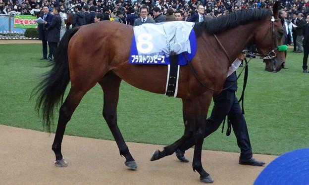 ブラストワンピース(5回中山8日 11R 第63回グランプリ 有馬記念(GI)出走馬)