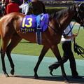 写真: アーモンドアイ(2回東京10日 11R 第79回 優駿牝馬(オークス)(GI)出走馬)