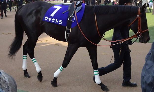 シャケトラ(5回中山8日 11R 第62回グランプリ 有馬記念(GI)出走馬)