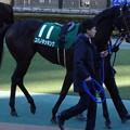 Photos: コパノキッキング(1回東京2日 11R 第33回 根岸ステークス(GIII)出走馬)