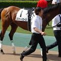 Photos: ロジャーバローズ(2回東京12日 11R 第86回 東京優駿 日本ダービー(GI)出走馬)