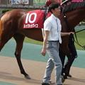 Photos: ルックトゥワイス(2回東京12日 12R 第133回 農林水産省賞典 目黒記念(GII)出走馬)