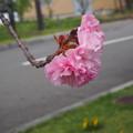 Photos: P5022520