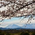 日光の山と桜~